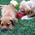 Workshop - Puppy 101 Feature Image