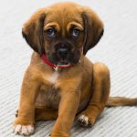 Puppy Training Class Feature Image